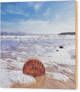 Scallop Shell On The Beach - Impressions Wood Print