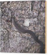 Scared Barter Snake Wood Print