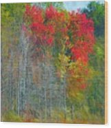Scarlet Autumn Burst Wood Print