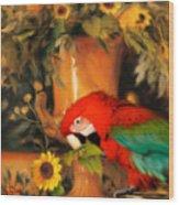 Scarlet Badboy Wood Print