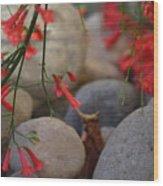 Scarlet Bugler Blossoms On Rocks Wood Print
