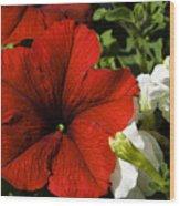 Scarlet Burst Wood Print