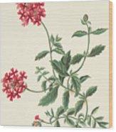 Scarlet Flowered Vervain Wood Print