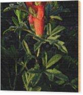 Scarlet Globemallow Wood Print