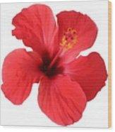 Scarlet Hibiscus Tropical Flower  Wood Print