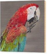 Scarlet Macaw - 2 Wood Print