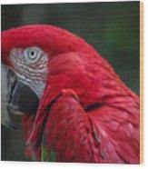 Scarlet Macaw Wood Print by Fabio Giannini