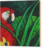 Scarlet Macaw Head Study Wood Print