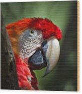 Scarlet Macaw Wood Print