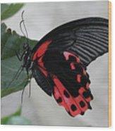 Scarlet Mormon Butterfly #2 Wood Print