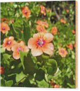Scarlet Pimpernel Flower Photograph Wood Print