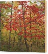 Scarlet Rebel #2 Wood Print