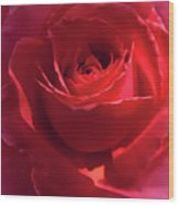 Scarlet Rose Flower Wood Print by Jennie Marie Schell