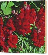 Scarlet Snapdragons At Pilgrim Place In Claremont-california  Wood Print
