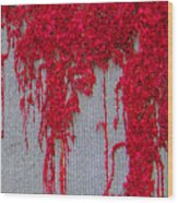 Scarlet Squiggle Wood Print