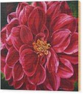 Scarlet Stunner Wood Print