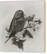 Scarlet Tanager - Black And White Wood Print