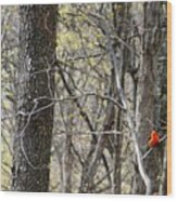 Scarlet Tanager Male Facing Wood Print