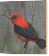 Scarlet Tanager On Stalk Wood Print