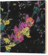 Scarlet Globe Mallow On Black Wood Print