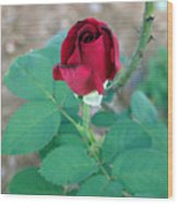 Scarlett's Rose Wood Print