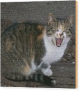 Scary Kitty Wood Print