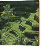 Scenic Valleys With Rice Fields In Bali Wood Print