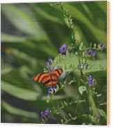 Scenic View Of An Orange Oak Tiger Butterfly Wood Print