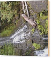 Scenic Water Fall Wood Print