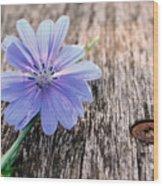 Scent  Florist Wood Print