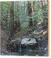 Scents And Subtle Sounds On Mount Tamalpais Wood Print