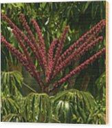 Schefflera Flower Wood Print