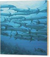 School Of Barracudas Underwater Wood Print