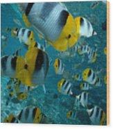 School Of Butterflyfish Wood Print