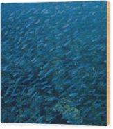 School Of Fish On Mas Bango Reef In Aruba Wood Print