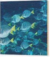 School Of Surgeonfish Cruising Reef Wood Print