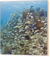 Schools Of Grunts, Snappers, Tangs Wood Print by Karen Doody