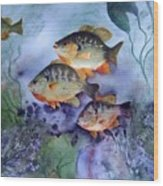 School's Out - Bluegills Wood Print