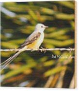 Scissor-tailed Flycatcher Wood Print