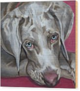 Scooby Weimaraner Pet Portrait Wood Print