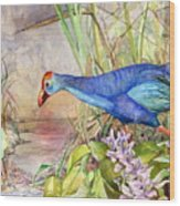 Scooting Coot - Purple Swamphen Wood Print