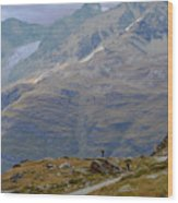 Scoping The Alps Wood Print