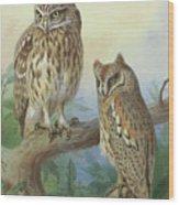 Scops Owl By Thorburn Wood Print