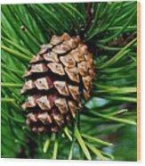 Scotch Pine Cone Wood Print