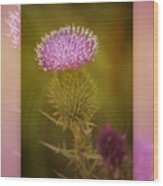 Scotch Thistle Wood Print