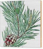 Scots Pine, Pinus Silvestris Wood Print