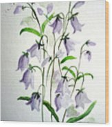 Scottish Blue Bells Wood Print