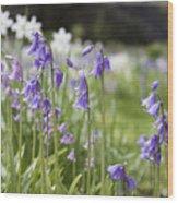 Scottish Bluebells Wood Print