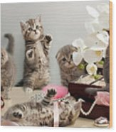 Scottish Fold Cats Wood Print