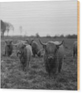 Scottish Highland Cattle On Field Wood Print by Stephan Ohlsen